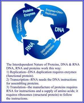 DNA Cycle3