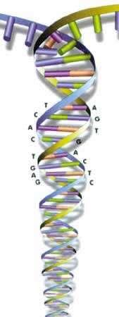 DNAstring